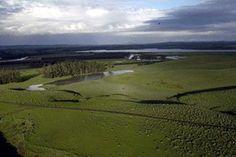Casos de Restauración Ecológica