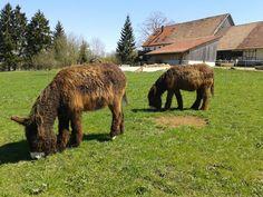 Das Hofgut Hopfenburg ist ein liebevoll restaurierter Bauernhof. Ihr könnt dort campen, oder einen Schäferwagen, Jurte oder ein Tipi mieten!