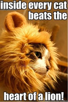 Inside every cat beets the heart of a lion.
