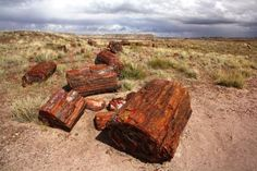Petrified Forest National Park - Mike Lyvers/Getty Images