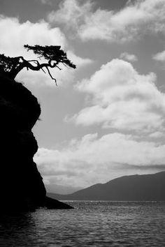 Weathered Fir Tree Silhouette on Matia Island by Jaynes Gallery : Animal Silhouette, Tree Silhouette, Washington State Tree, Yosemite National Park, National Parks, Douglas Fir Tree, Owl Pictures, San Juan Islands, Island Tour