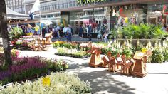 Dutch Flowers on Tour...Market Place returns to the centre of Sheffield for a 5 day Continental Market!   Wednesday 15th - Sunday 19th July 2015