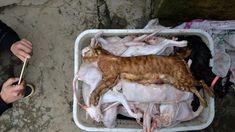 Ratusan Kucing Dibantai, Dagingnya Dijual Sebagai Daging Kelinci