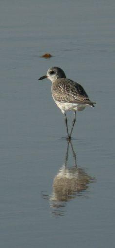 sand bird