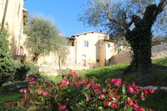 L'Olivo Italiano - la vista dal giardino - Antico Spedale del Bigallo - Bagno a Ripoli - Firenze http://www.lolivoitaliano.it/