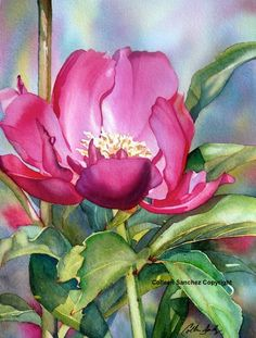"""Pink Peony"" by Colleen Sanchez."