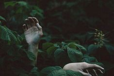 #Hands #Forest /ThrillOfTheHunt /LineOfBeauty #AY