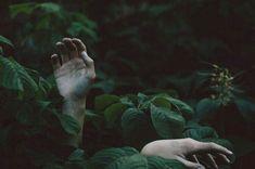 #Hands #Forest /ThrillOfTheHunt /LineOfBeauty #AY