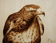 """""""Beyond"""" Pyrography by Cara Jordan. This hawk was burned on an 8 by 10 inch piece of birch ply. He's one of the residents of Jungle Cat World."""