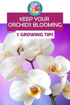 Discover the 7 growing tips you need to know to keep your orchids blooming. Orchids can grow and thrive all year long and produce coloful and vibrant blooms. Learn the 7 tips you need to know to help keep your orchids blooming all year long.