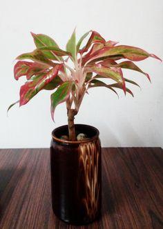 Nursery, Vase, Fruit, Green, Nature, Flowers, Plants, Home Decor, Naturaleza