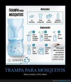 TRAMPA PARA MOSQUITOS - Eficaz, barata y 100% natural