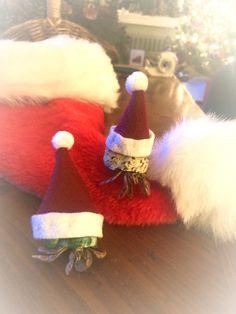 Hermit crabs in Santa hats