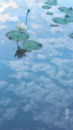 Molang, Moon Photography, Aesthetic Images, Chinese Culture, Writing Inspiration, Amazing Nature, Nature Photos, Nice View, Lotus
