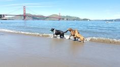 Dog-Friendly San Francisco: All the Best Parks, Restaurants, and Shops to Bring Your Pooch *crissy beach