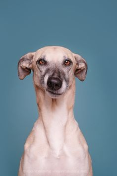 Intimate Portraits Reveal Amusing Facial Expressions of Skeptical Dogs Funny Dogs, Funny Animals, Cute Animals, Animals Dog, Skeptical Dogs, Goofy Dog, Dog Expressions, Tier Fotos, Crazy Dog