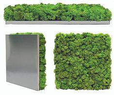 Moss wall art, Mosstile 100% Organic panel Manufacturer   Scandia Moss