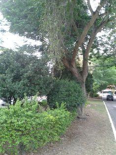 Ruas arborizadas em Camboinhas, Niterói, RJ