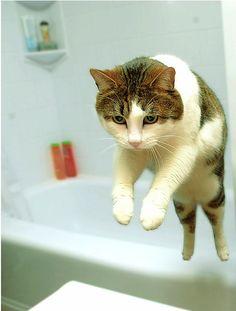 Leaping cat    Photo:Mike Feswick