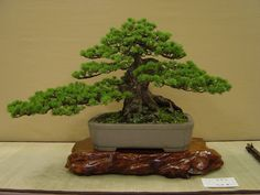 bonsai | the Universal Exhibition of 1878 in Paris and 1910 in London, bonsai ...