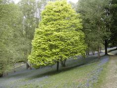 I love the way this tree is naturally following the slope of the hill.