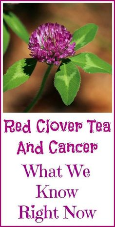Red Clover Tea and Cancer #redteafitness