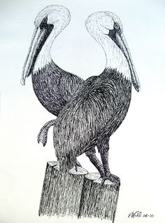 PELICANS - Pen and ink drawing of two pelicans on a piling. For prints, go to: http://frederic-kohli.artistwebsites.com.
