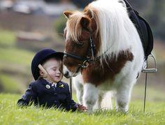 Pony nuzzles fallen rider