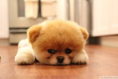 Little Cute Dog Bored Lying Waiting For Mom To Come Home http://ift.tt/2cyid28
