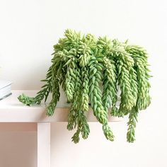 How Not to Kill These Trending Indoor Plants | Brit + Co