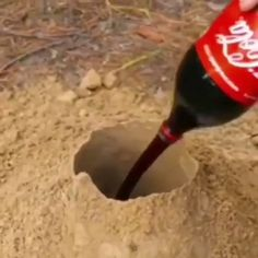 Coca-Cola EXPLOSION 💥 - Welcome to our website, We hope you are satisfied with the content we offer. Science Projects For Kids, Science Crafts, Science For Kids, Summer Science, Preschool Science, Science Activities, Diy Crafts Hacks, Fun Crafts, Cool Science Experiments