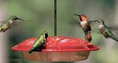 HummZinger Hummingbird Feeders.  Leak free, crafted in the USA and has extra safeguards to prevent the attraction of bees and other insects