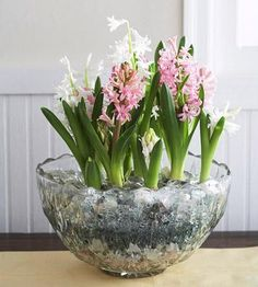 Hyacinths  A bowl of white and pink hyacinth scream spring. But the effect is easy to get even midwinter. Bonus: they emit a wonderful fragrance.