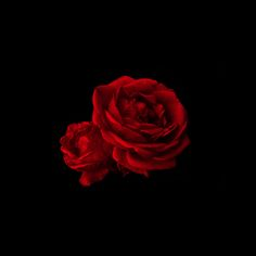 Ios 8 Wallpaper Red Flames 2448x2448px   0 B ratio: 1:1, Valentine Roses Red Parallax Hd Iphone Ipad Wallpaper #611100