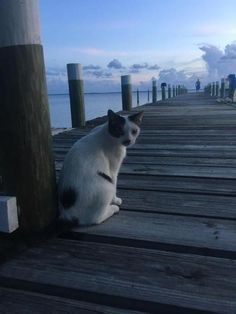 Wild cat came to my dock #cute #cats Cat picture by Waynette Cleveland