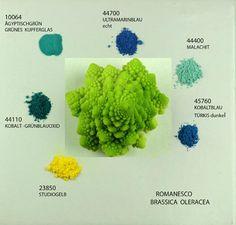 Bloemkool » Colors of nature » Kremer Pigmente GmbH & Co. KG