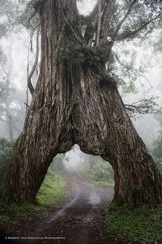 Into the Mystic, #Arusha National Park, #Tanzania