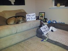 """This is not my bed... This is my bed."" ~ Dog Shaming shame - - Attack Of The Funny Dogs – 60 Pics"