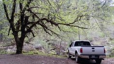 Ford Super Duty F250 in the Woods 4X4