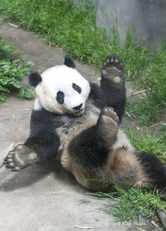 Yun Zi rolling by... by Rita Petita, via Flickr