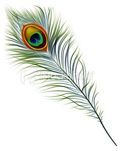 Peacock Feather Royalty Free Stock Vector Art Illustration