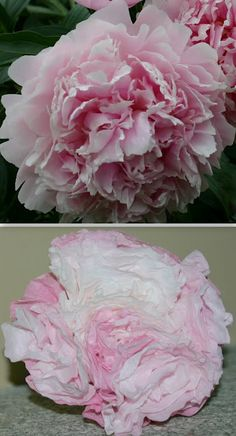 Coffee filter craft ideas peony filter and tutorials coffee filter peonies decorations for wedding mightylinksfo