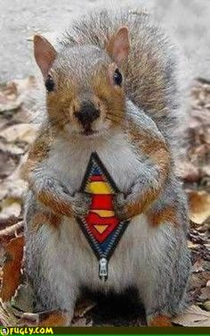 Suuuuper Squirrrrrrel