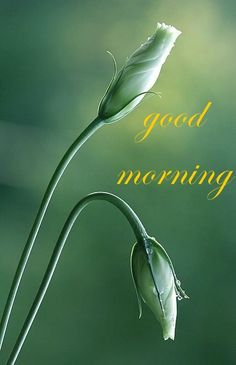 Good Morning Card for Media with Two Delicate Flowers
