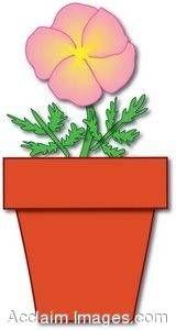 Pink Flower in a Pot