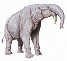 Modern reconstruction of Dinotherium Giganteus.The species went extinct about 1million years ago.