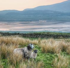 Duddon Estuary and Kirkby Moor , Lancashire Mountains, Nature, Travel, Voyage, Viajes, Traveling, The Great Outdoors, Trips, Mother Nature