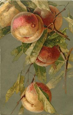 Peaches by C. Klein