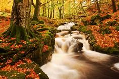 Wicklow woods, Ireland - in the fall