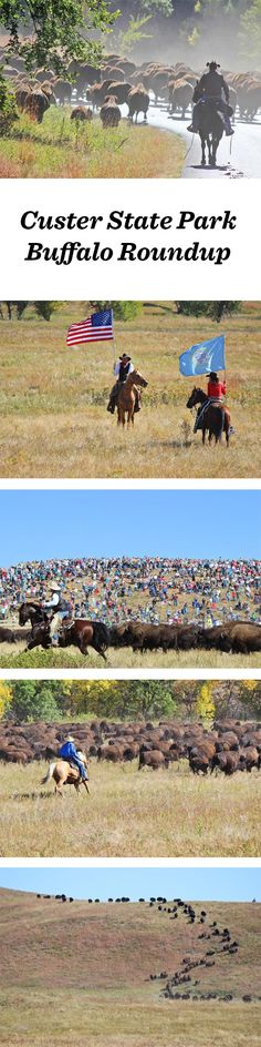 Crowds flock to Custer State Park to witness the Buffalo Roundup each September. Didn't make it to South Dakota this year? Not to worry. Trevor Meers gives you the highlights and some advice for next year's getaway.